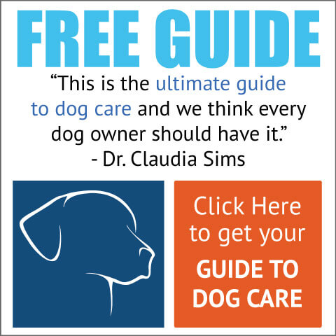Guide To Dog Care