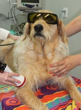 murray with goggles