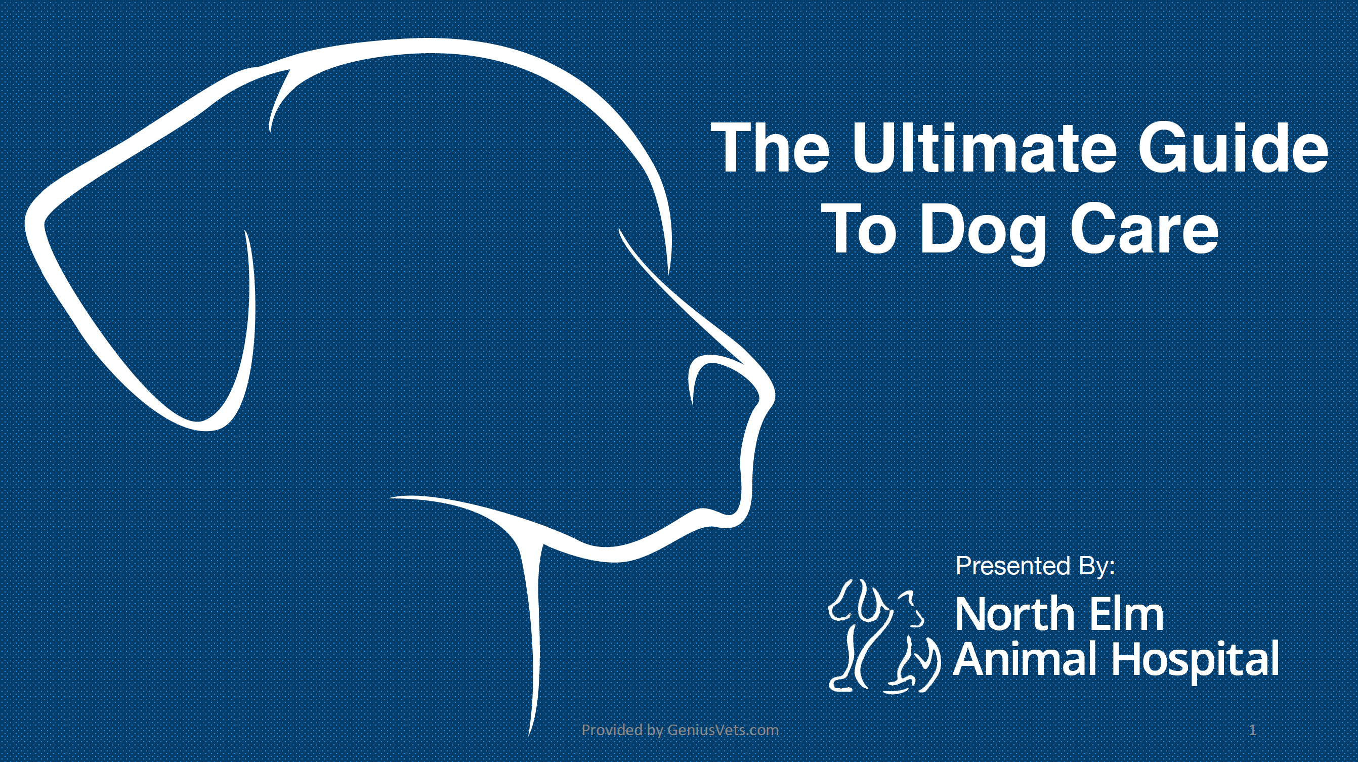 North Elm Guide To Dog Care