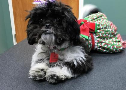 dog in cute holiday outfit