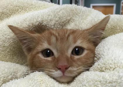 Kitten after bath