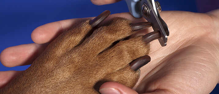 Can I Clip My Dogs Claws